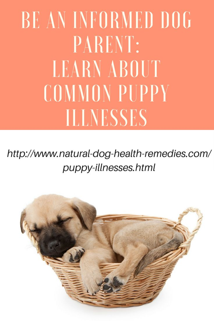 Being knowledgeable about common puppy illnesses can save your pup's life! Be sure to visit this page to find out more: