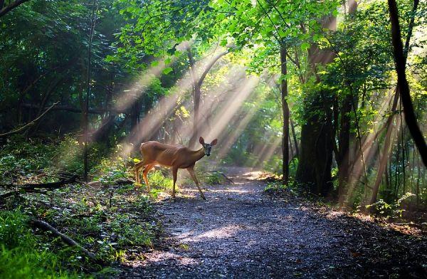 Google Image Result for http://slodive.com/wp-content/uploads/2011/12/deer-pictures/beautiful-deer.jpg
