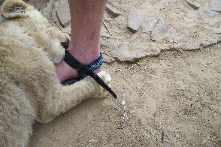 Touching wild animals under strict control.
