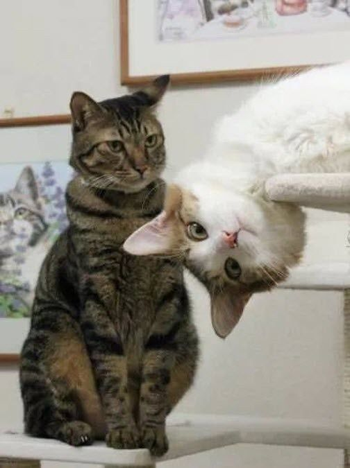 The Photobomb Cat. Perfectly Timed Pictures of Cats