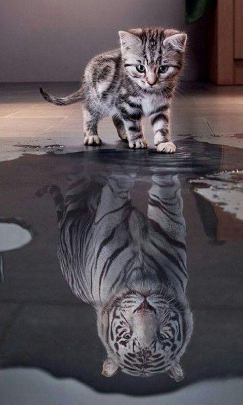 Liebenswert Süße lustige Katze Kätzchen Bild V…
