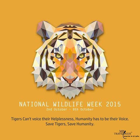 Save Tigers, save Humanity! WildLife Week |MPTravelogue|