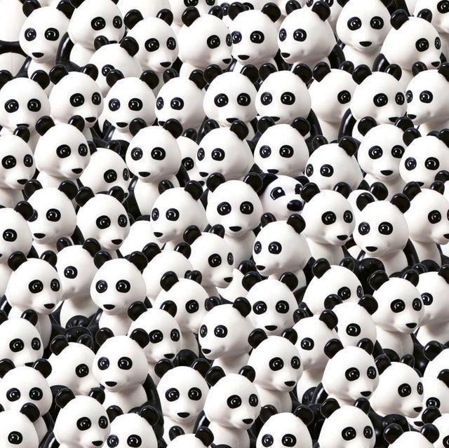 PANDALARIN ARASINDAKİ KÖPEĞİ BULUN... Encuentra al perro entre los osos panda.