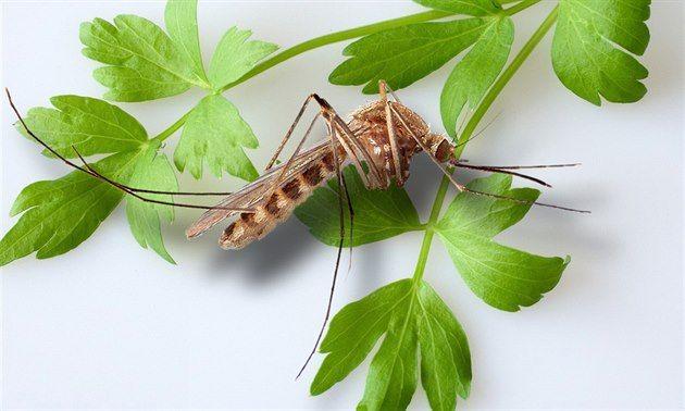 Proti komárům