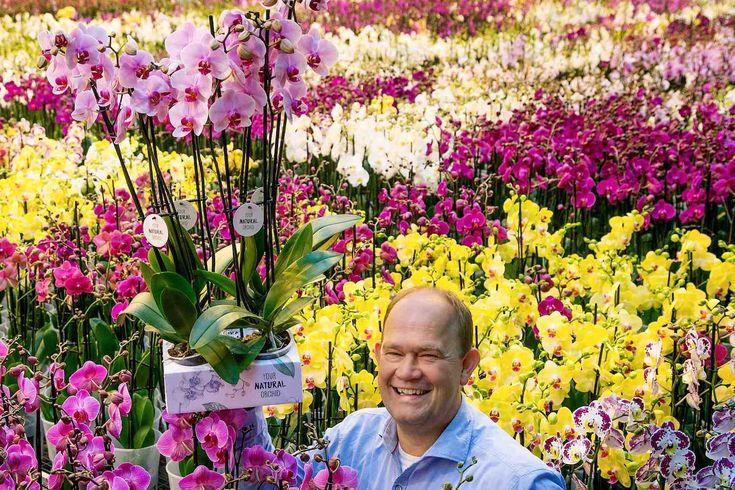Een primeur voor kweker Jan Stolk van Stolk Flora uit Bleiswijk. Hij is de eerste die al zijn orchideeën op 100% biologische basis kweekt.De 'Your Natural Orchid' werd gepresenteerd op de vakbeurs Royal FloraHolland Trade Fair in Aalsmeer. Tussen meer dan 500 kwekers en veredelaars die er hun nieuwste en mooiste bloemen en planten aan