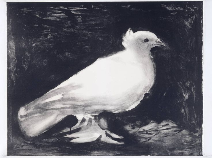 Very pretty lithograph on paper by Pablo Picasso / Dove / 1949 / at the Tate