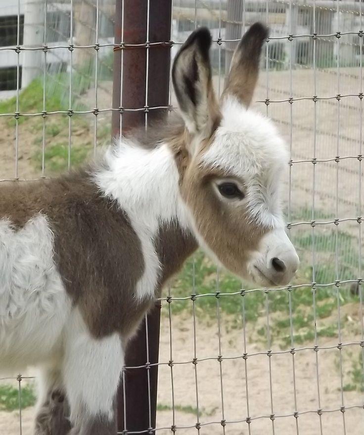 Baby donkey....