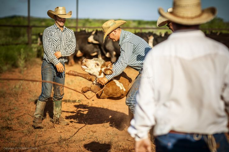 1000 images about cowboys working on pinterest barrel racing