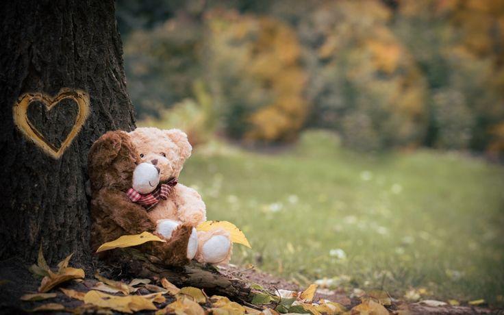 Скачать обои медведи, ствол, пара, дерево, мишки, листья, игрушки, сердце, природа, раздел разное в разрешении 2048x1403