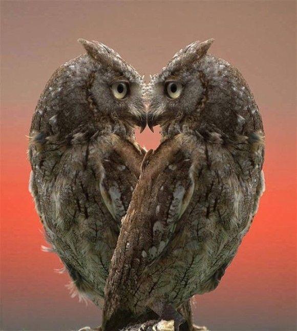 レッツ猛禽LOVE!かわいいフクロウ画像と共に学ぶ20のフクロウトリビア : カラパイア