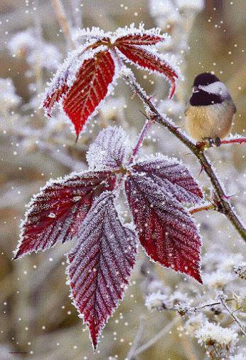 Последний лист, с деревьев сбросив Ушла чарующая осень В след, не смахнув от снега ног Зима ступила на порог. Прошлась по лесу, словно мелом Укрыла ели снегом белым В лесу светло и зримей стало Озёра словно из кристалла. Подружки белые берёзы Стоят рядами под бугром От инея, и от мороза Их ветви блещут серебром. А …