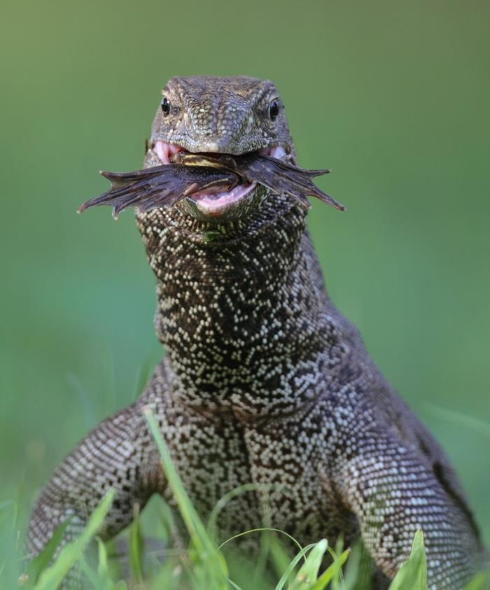 17+ Best Images About Amazing Reptiles On Pinterest