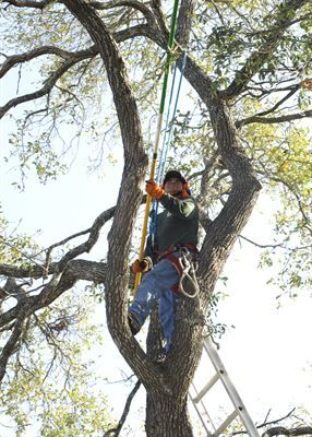 Whenever you notice a tree which may be dying, you should always call an arborist to assess it properly. The sooner you can catch the problem the less costly the tree removal Sydney is. We may be able to actually save it.