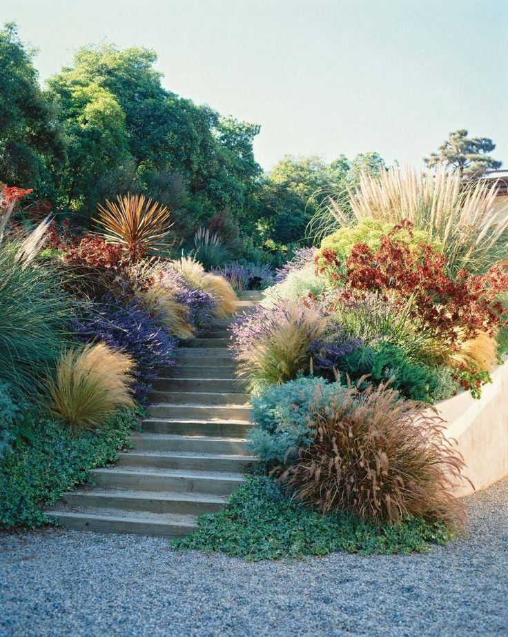 How to give your garden a California-style makeover - The Globe and Mail Simple stairs made of rough-hewn lumber jog up a front slope, with a slight undulation from side to side, to create an informal entry. Flanked by ornamental grasses, kangaroo paws (Anigozanthos 'Red Cross') and the variety of lavender used in the perfume trade (Lavandula x intermedia 'Grosso'), the rustic ascent smells as good as it looks.