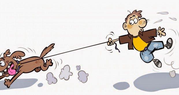 Psi Przyjaciel - Behawiorysta / Instruktor Szkolenia Psów: Mój pies ciągnie na smyczy. Co robić?
