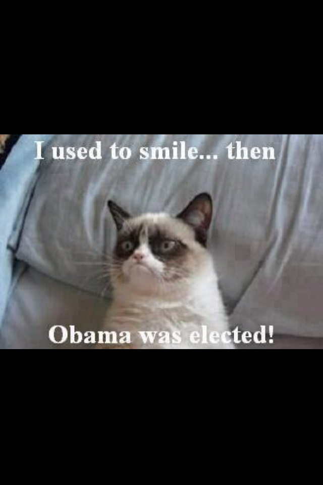 Angry cat..... No Obama