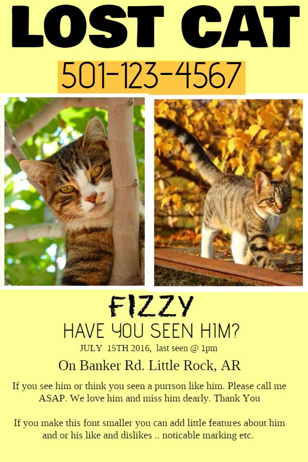 Lost Cat Flyer Sample.  Lost Pet Flyer Maker