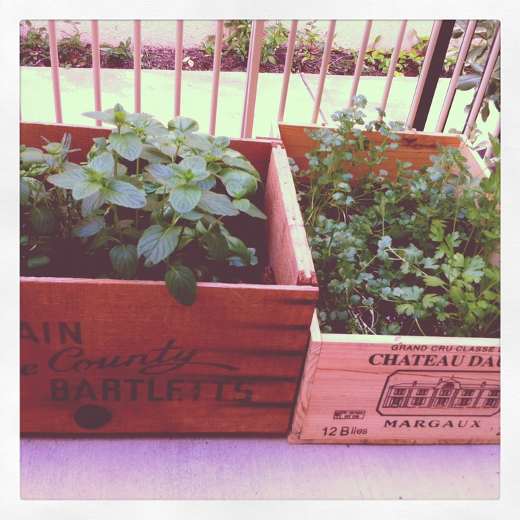 68 best Gardening with wine boxes and