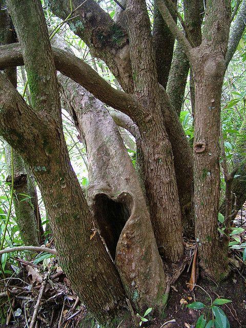 heart shaped natural