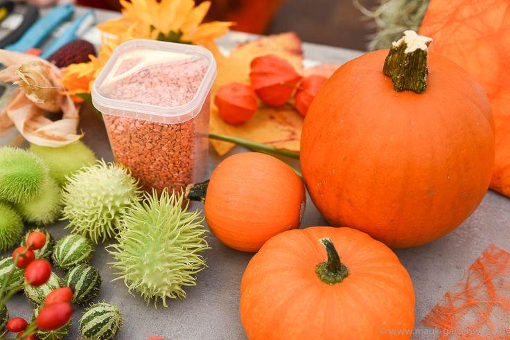Kürbisse, verschiedene Früchte und Dekosand