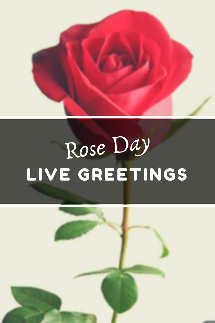 Happy Rose Day 2019 Live Greeting Card Write Your Name Share On WhatsApp Wish Love Quotes