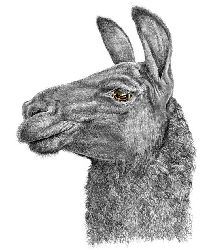 Llama Face by AthenaTT.deviantart.com on @deviantART
