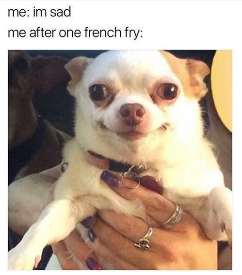 11+ LOL Animals Memes / Pics Für Tierliebhaber