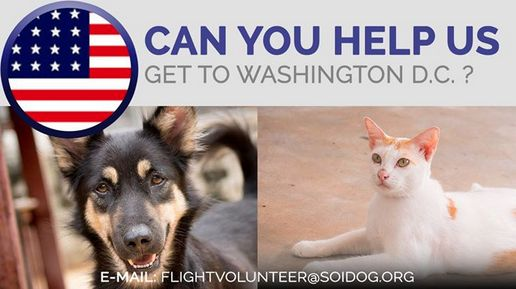 Taylan and Plantom have been adopted and need to get to their forever homes in Washington D.C.! If you are traveling FROM Thailand TO Washington D.C., on BOOKED tickets with Thai Airways, All Nippon Airways (ANA), China Airlines, Qatar, Korean Air, JAL, EVA, Lufthansa or KLM, please EMAIL flightvolunteer@soidog.org for more information. http://www.soidog.org/en/be-a-flight-volunteer