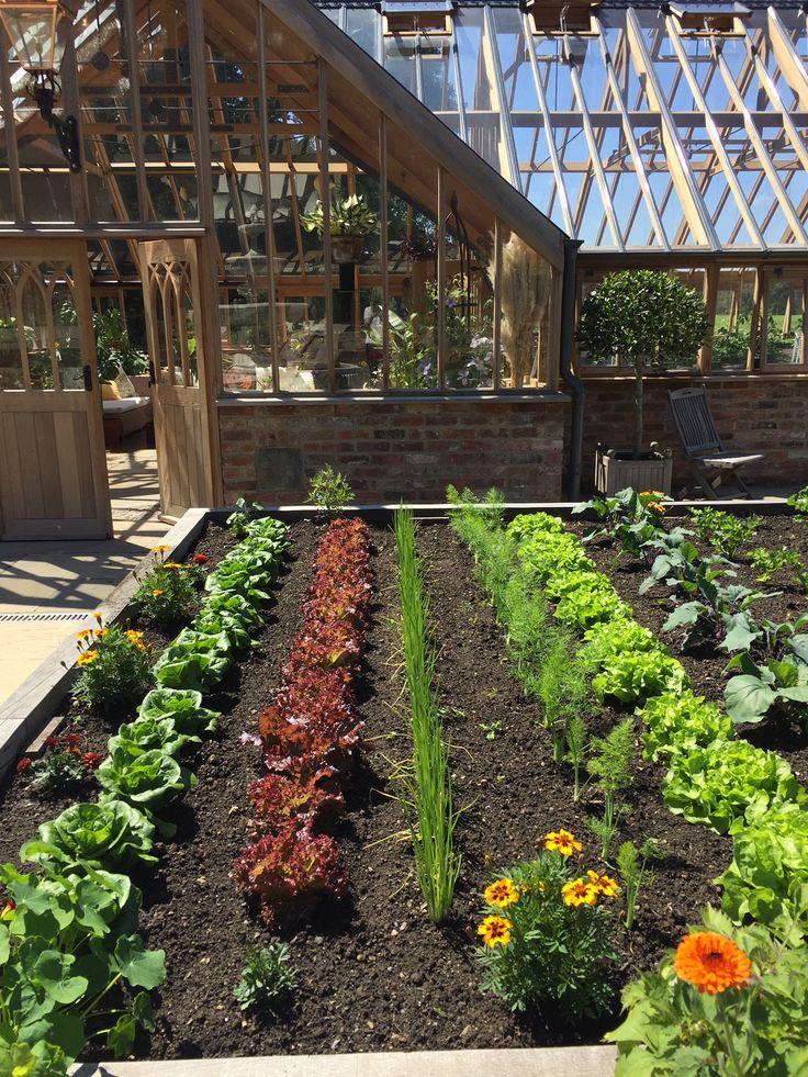 Summer vegetables in the kitchen garden in 2020 Kitchen