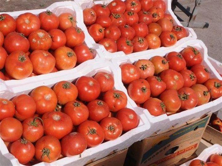أسعار الطماطم تتراجع والكوسة ترتفع في سوق العبور اليوم كتبت دينا خالد تراجع سعر كيلو الطماطم بقيمة 50 قرشا ليتراوح بين 2 و5 جنيه Vegetables Tomato Food