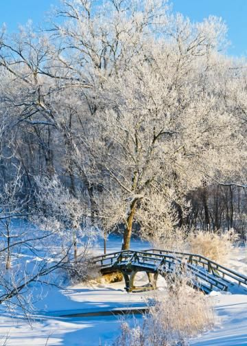On Sale, Greeting Card, Winter Scene, Footbridge and Snowy Tree, 5 x 7 Greeting Card by DavidPerezPhotography for $3.99