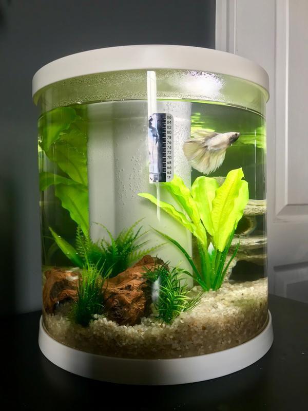 Pin By Toccara On Envi In 2020 Betta Aquarium Small Fish Tanks Betta