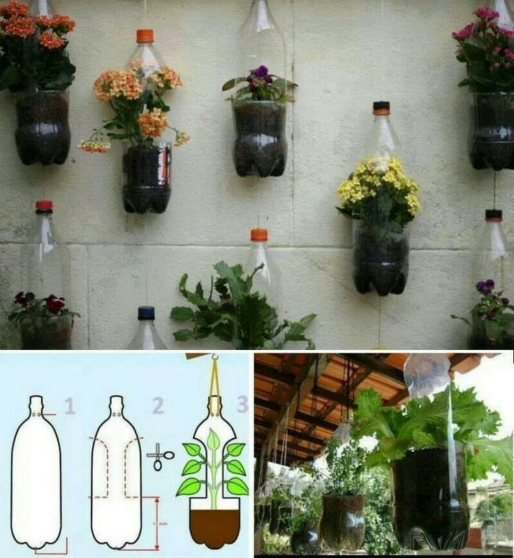 Bottled Plants