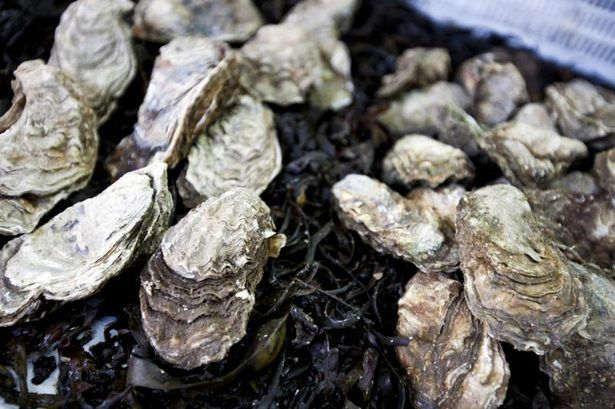 Foods That Go with Steamed Oysters thumbnail