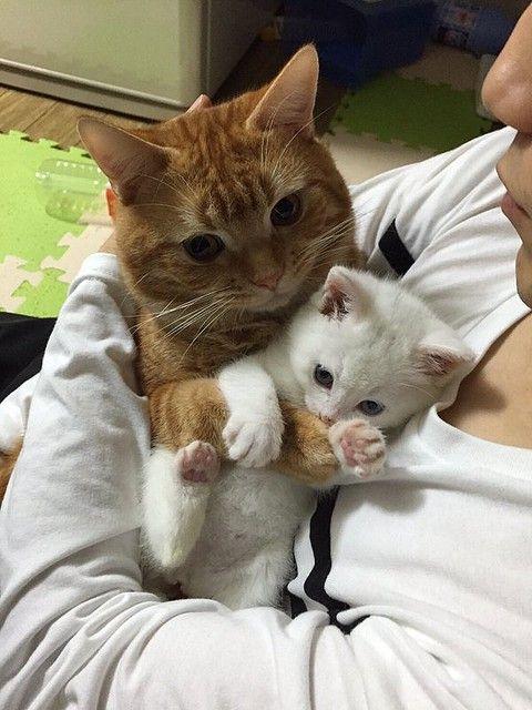 子猫を抱きしめて離さない猫 「可愛すぎる」とTwitterで話題 - ライブドアニュース