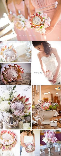 Protea_wedding_lights by Lovilee, via Flickr