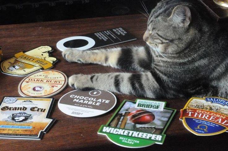 Cat pub Bag 'o Nails