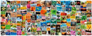 Foto-Sharing: Wie organisiere ich meine Fotos am besten?