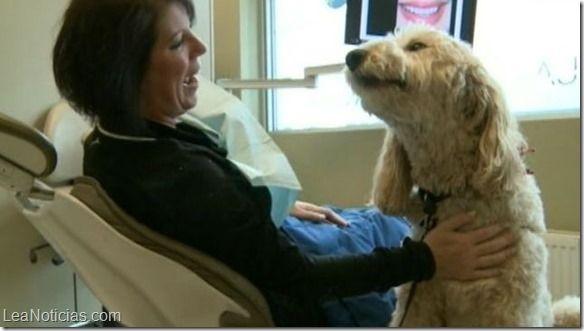 Humprey, el perro que ayuda a superar el miedo al dentista (Fotos + Ahh que tierno) - http://www.leanoticias.com/2014/07/02/humprey-el-perro-que-ayuda-superar-el-miedo-al-dentista-fotos-ahh-que-tierno/