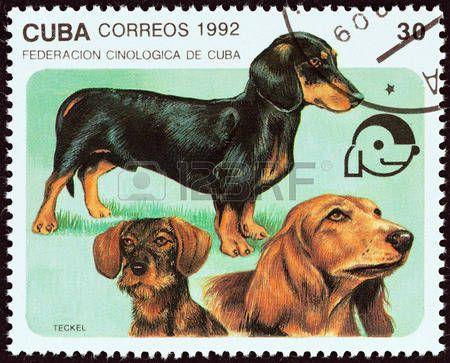 """sellos postales de perros salchichas: CUBA - CIRCA 1992: Un sello impreso en Cuba desde el tema """"Perros"""" muestra de pelo corto, pelo largo y perros salchicha de pelo de alambre, alrededor de 1992. Editorial"""
