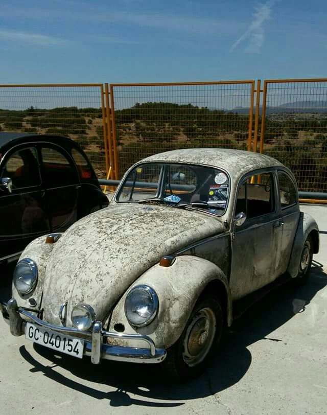 Rusty Beetle Madrid_Spain