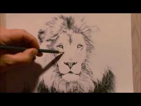 Realistic Lion Drawing How To Draw A Lion Lion Drawing
