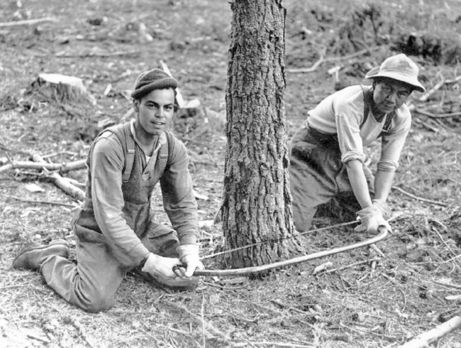 Lumberjacks who joined the Canadian Forestry Corps in World War Two and logged the forests of Scotland brought with them the most up-to-date logging equipment available, including caterpillar tractors, lorries, and winches for high-lead logging. However, axes and crosscut handsaws continued to be their stock tools of the trade. On the left is G. F. Dick from Port Arthur, Ontario; on the right is Zachary Birdstone from Cranbrook, B.C. For more…