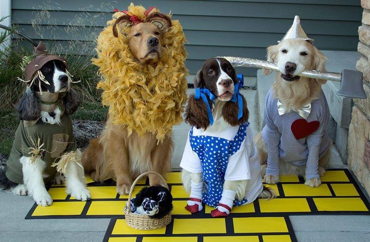 The Wizard of Dogs...cutest dog costumes ever! Found on Facebook-The Dog Snobs October 11 at 7:15pm If you're going put your dogs in costumes, don't mess around - do it up right. Gibson as the Scarecrow, Flynn as the Cowardly Lion, Julie as Dorothy and Bravo as the Tin Man. ( submitted by Sue Z)