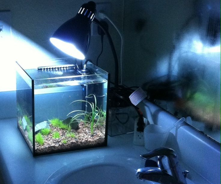 17 best images about aquarium fish and ideas on pinterest for Cloudy water in fish tank solutions