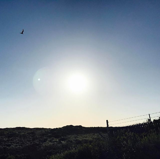 Sunrise & bird flying over the sand dunes of Moss Landing, CA. Go to tsp.budandroach.com and enjoy the magic. #podcast #podcasts #talkradio #radioshow #internetradio #bird #meditate #podcasting #yoga #artists #la #nyc #santacruz #mosslanding #california #inspire #sun #sunday #radio #surf #skateboard #snowboard #sunrise #travel #fly #sanddunes #monterey #mosslandinglocals #montereybaylocals - posted by The Subjective Perspective https://www.instagram.com/thesubjectiveperspective. See more of…