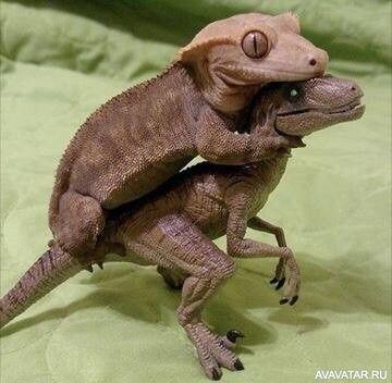 #Geckos, #dinosaurs, #animals, #images, #Гекконы, #динозавры, #животные, #картинки https://avavatar.ru/image/8174
