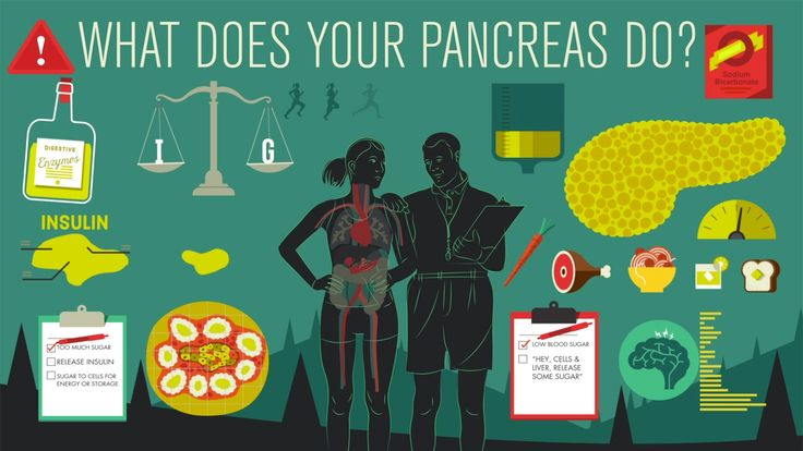 View full lesson: http://ed.ted.com/lessons/what-does-the-pancreas-do-emma-bryce Beneath your ribs, you'll find, among other things, the pancreas -- an organ...