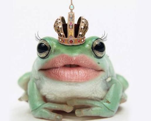 Google Image Result for http://www.funnyjunksite.com/pictures/funnypics/animals/frog/funny_frog_picture_10.jpg