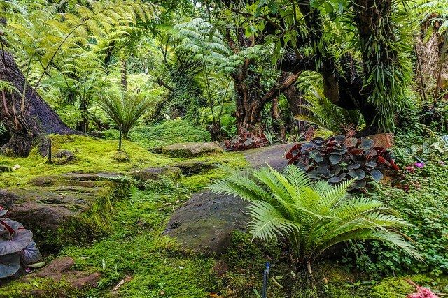 Landscape Garden Forest Style Free Images Photo Icon0 Com Garden Makeover Forest Garden Landscape